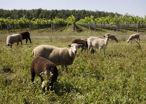 Biodynamic Winemaking