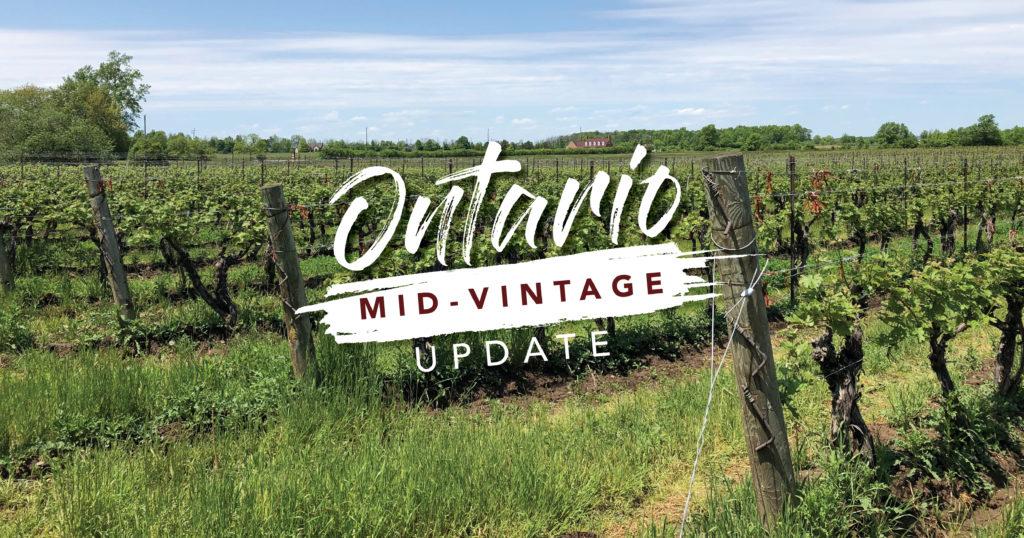 Ontario vintage report