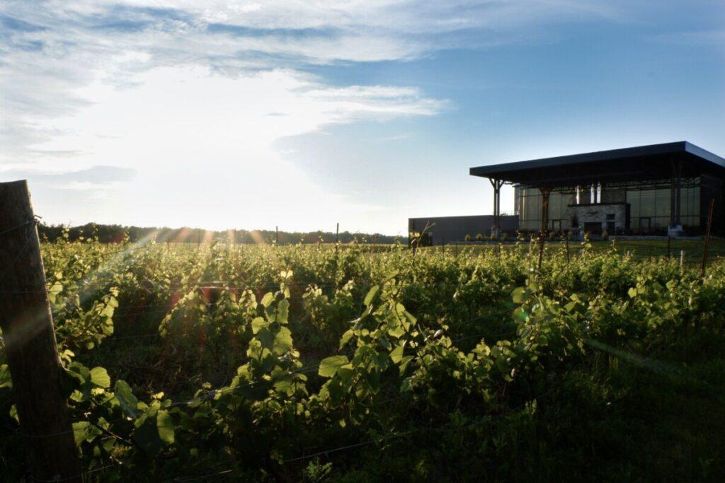 Dark Horse Winery