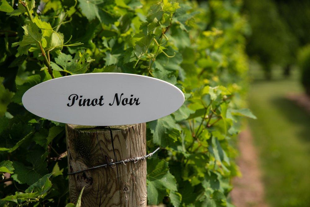 Ontario Pinot Noir