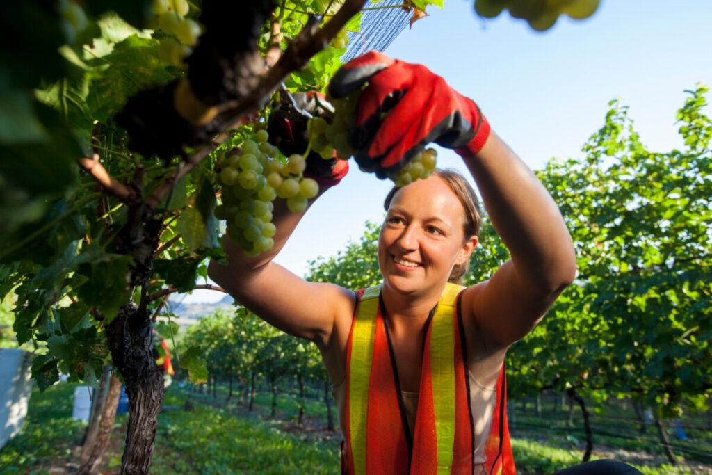 Wine Growers Canada