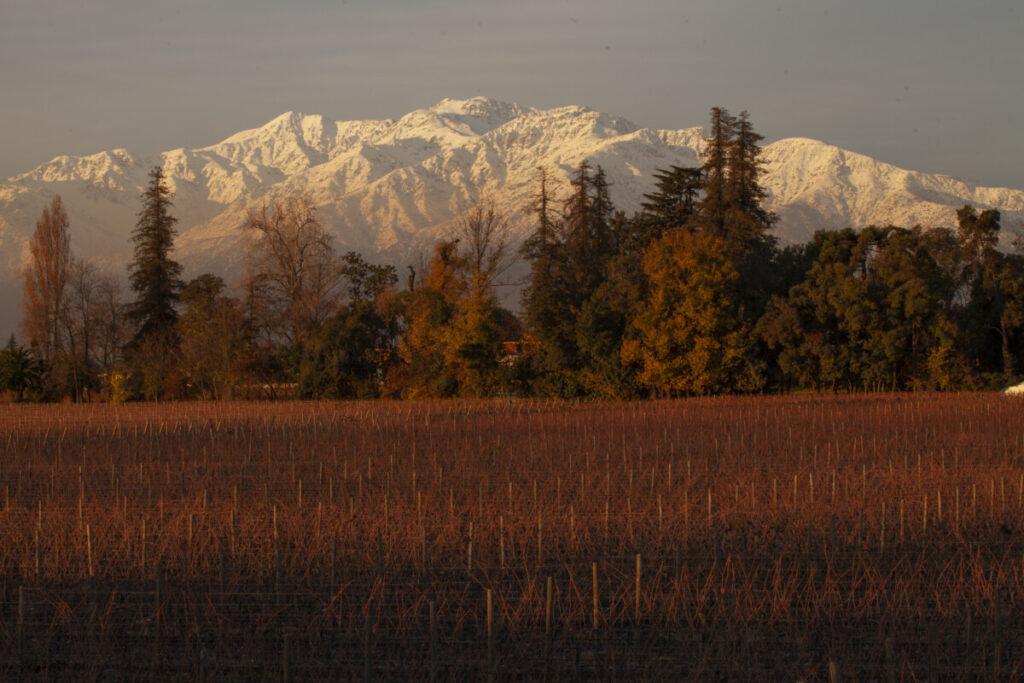 Icon Wines: Chile